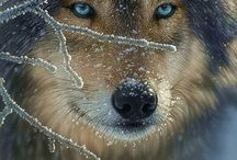"""a l l . c r e a t u r e s / g r e a t . a n d . s m a l l  """"Every creature is better alive than dead, men and moose and pine trees, and he who understands it aright will rather preserve its life than destroy it."""" ~ Henry David Thoreau  / by Debi Spillan"""