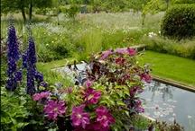 Gardens / by Babity Erikson