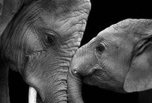 Animal Attraction / by Patty Nowell-Odom