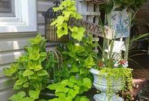 Flowering/Gardening / by Yvette Govero