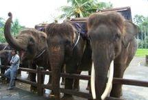 Bali family trip ideas / by Nicole Goggins