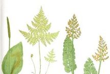 Plantbook: Create Your Own Herbal