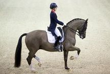 Equestrian news / The latest news related to horses and horse sport