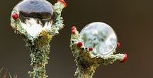 Liechens / The amazing symbiosis of moss, fungi and bacteria