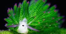 Sea slugs / Sea slugs are snails that do not own a house and you will be surprised how amazing and diverse they can get