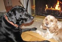 """My Pets ~ Playmates / I can't imagine my life without my pets.    Misty is a brilliant black lab, AKA """"Sugar"""" smartest dog I have ever had .  Then there is Emmie, a fiesty sweetie, rescue ~ cocker spaniel....and of course our 10 year old Red Ear Slider - Turtle,  named Dina AKA """"Din...Din""""... Hanging out, Livin...La Vida Loca with all the foster pups throughout the years and other buddies."""
