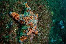 Wonders of the Ocean / by Fanny Correa