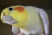 Birds ...Parrot Jungle