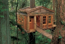 Treehouses / If I Could Live in a Tree.... / by Peer Into The Past: History
