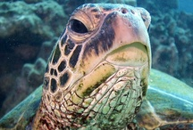Turtle ~Tortoises ~ Creek
