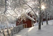 Winter Wonderland / by Karen Halaszyn