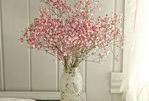 Floral ~ Plant Display