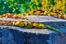 Nature Photography / Amazing nature photography