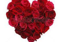 Charming Rose