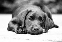 Cute & Cuddley / ANIMALS ANIMALS ANIMALS / by Michelle Anthony
