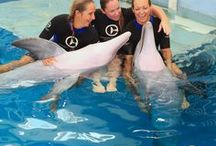clearwater aquarium-dolphin tale