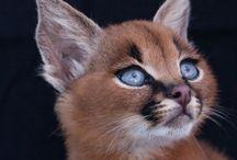 Animals / Una bellezza unica!!!