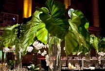 Flowers and Centerpieces / by Amy Lindsey
