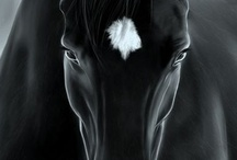 horses my love / that's all said. I had to be a horse somewhen, somewhere. My passion brings me in total fusion with my friends horses / by Luigi Consiglio