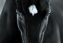 horses my love / by Luigi Consiglio