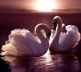 Graceful,Elegant, Unusual Birds