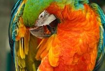 Birds- Parrots, Parakeets, Cockatoos