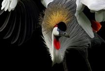 Birds- Storks, Cranes