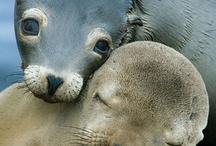 Sea- Mammals