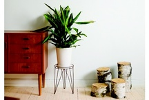 Plants. / by Katinka