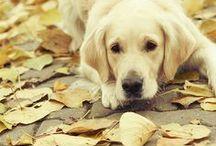 Dog Stuff / by Katharine Hayes