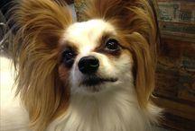 いぬ dogs / Ilove dogs!
