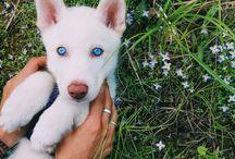Puppies X