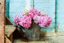 Pretty Florals / by The Floral Alchemist