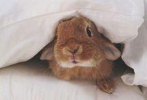 A N I M A L S / Furry Friends. Pets. Wild. Innocent. Cute. / by Danica Marie