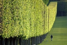 Garden :: Landscape Design