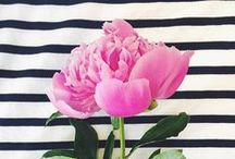 Pretty peonies / by The Floral Alchemist