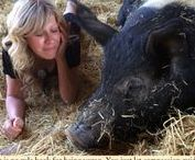 Colleen's Words of Compassion / Compassion for Animals | Animal Rights | Veganism | Vegan Life
