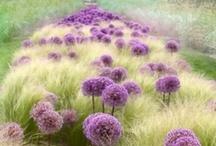 Garden :: Ornamental Grasses