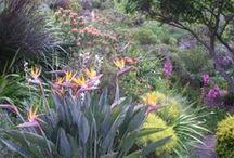 Garden :: Slope Garden Ideas