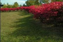 Garden :: Landscape Berms