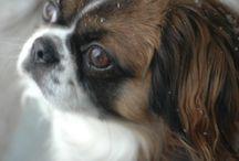 Puppy Love / by Maria Quattro