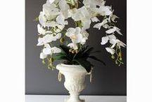 Białe storczyki - dekoracje