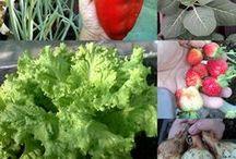 horta em vasos do ricardo / Dicas de de como começar uma horta em casa ou apartamento www.youtube.com/c/hortaemvasosdoricardo