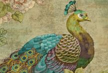 Peacock Obsession / Peacocks are the new Owls / by Amanda Brown