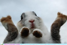 cheeky animals / by Amber Burck