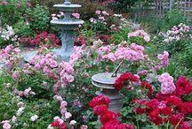 Flower Gardening / by Karen Steele