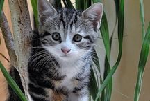 Favourite Cat Pictures / by Karen Steele