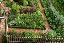Vegetable Gardening / by Karen Steele