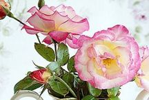 Delicate Roses / by Karen Steele