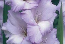 Lavender, Lilac & Violet / by Karen Steele
